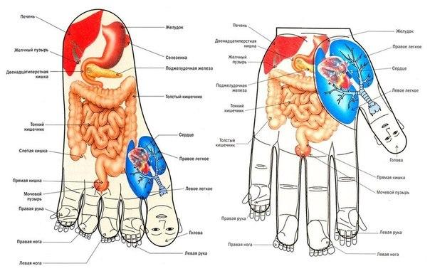 Быстрый массаж на все случаи жизни: (3 фото) - картинка