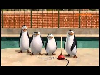 Pingwiny z Madagaskaru - Kupa śmiechu!