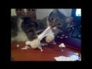 кошкабориска Грызет в клочья офисную бумагу, документы на столе не оставишь