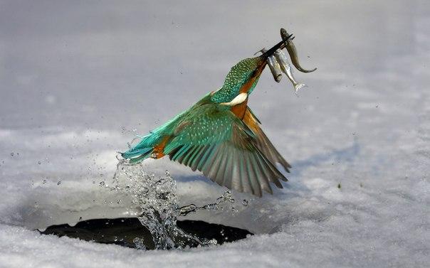 Природа умеет удивлять