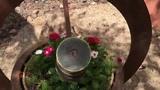 Plant Kaleidoscope