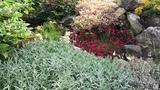 Садовые цветы июня. Многолетники. Видео обзор 12 растений (часть 2).