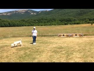 Соревнования по поиску трюфеля. Кизиловое, Байдарская долина