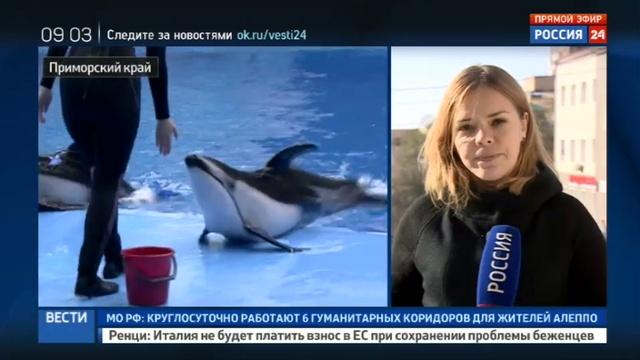 Новости на Россия 24 • Гибелью животных в Приморском океанариуме займутся московские следователи