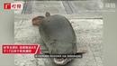 «Свирепую убийцу всего живого» выловили в озере в Китае