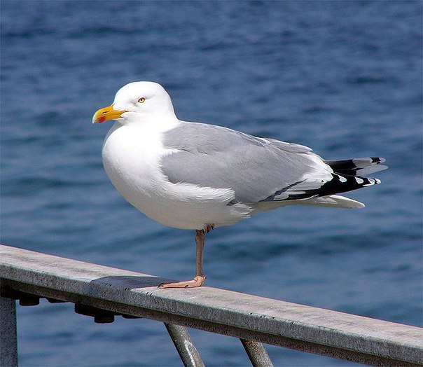 птица мартын фото
