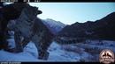 Видео Снежный барс ирбис гуляет по заповеднику
