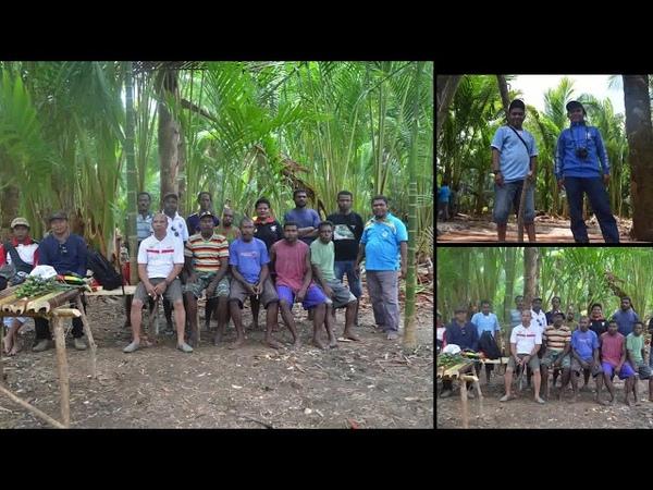 Penataan Tanaman Sagu di Provinsi Papua