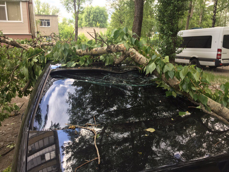 Фото: в Брянске упавшее дерево раздавило «Мерседес»