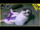 Смешные кошки приколы про кошек и котов 129 Кошки ТОП подборка с котами 2019