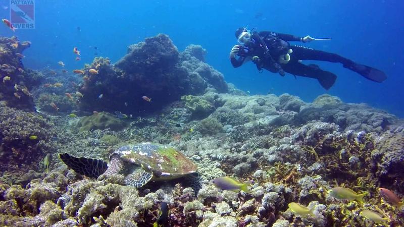 Черепаха кушает кораллы. Дайвсайт Crystal Bay, остров Нуса-Пенида. Дайвинг на Бали