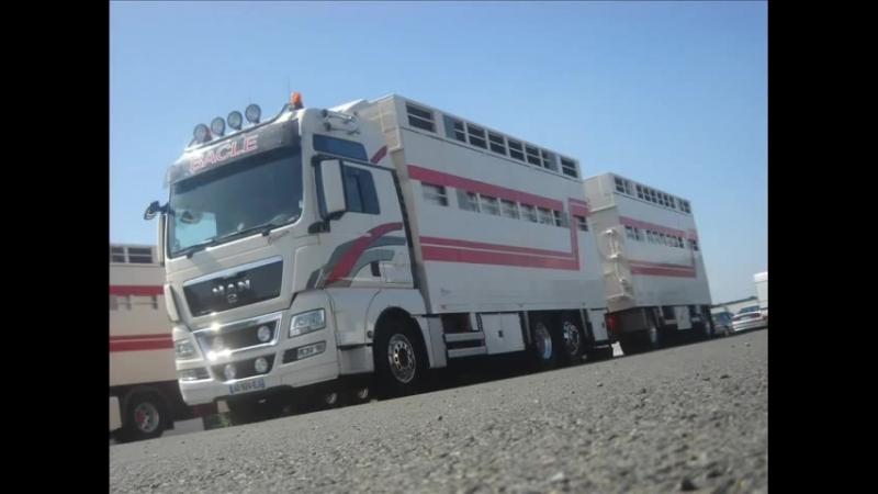 Transports Bacle livestock