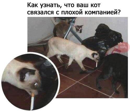 http://cs14102.vk.me/c7006/v7006157/d2b7/7BxoQYw9ZLk.jpg