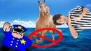Лошади не могут скакать по воде