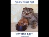 Почему моя еда ест мою еду?