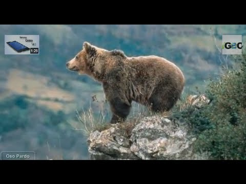 Picos de Europa: Covadonga, Cares y Fuente Dé / Picos de Europa National Park [ » Freewka.com - Смотреть онлайн в хорощем качестве