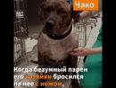 Собаки, рискнувшие жизнью ради человека