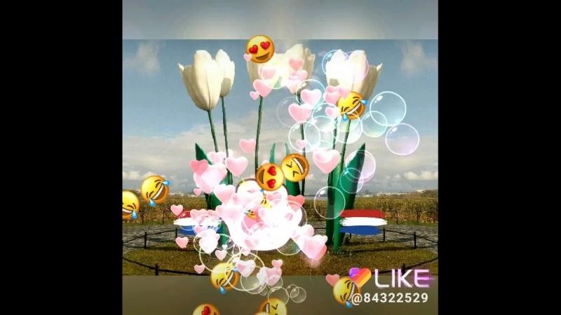 Like_2018-06-03-10-08-03.mp4