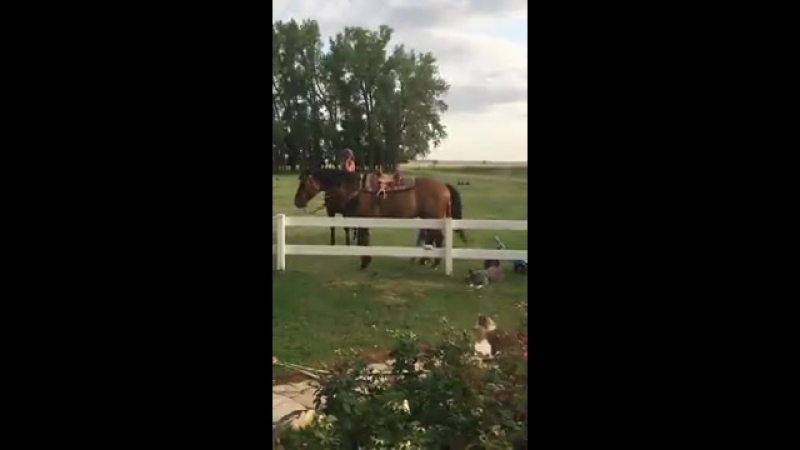 как правильно забираться на лошадь