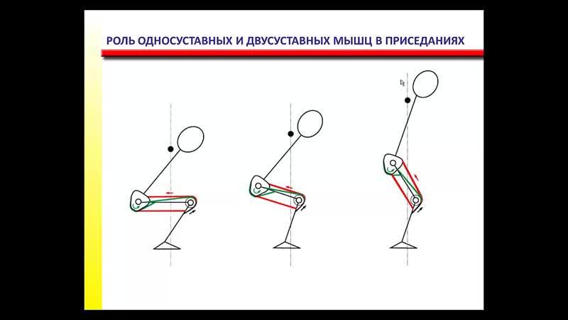 Функциональная анатомия, основы биомеханики
