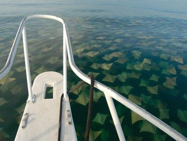 Представьте, что вы оказались в лодке и вокруг вас до самого горизонта, в воде плывут скаты