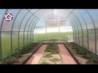 Урожай в теплице ЗАВОД ГОТОВЫХ ТЕПЛИЦ
