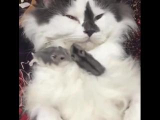 Наглые мышки