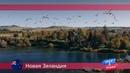 Орел и решка: Новая Зеландия