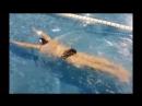 Лечение сколиоза средствами плавания
