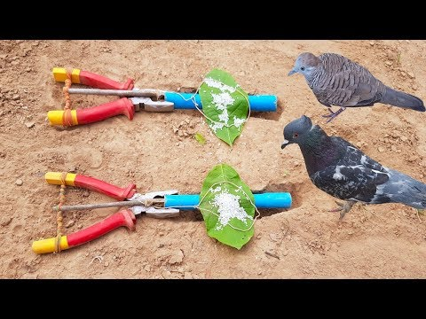 Best DIY Bird Trap Using Pliers With Pipe - How To Use Pliers To Trap Birds