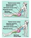 Упражнение, которое поможет убрать живот и исправить осанку
