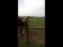Наши любимые лошадки