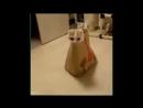 ЖЕСТЬ приколы про котов до слёз 2015