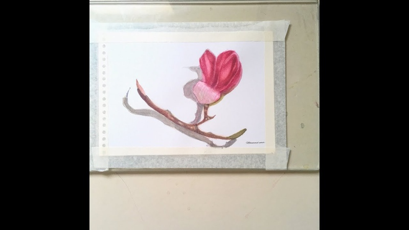 How to paint magnolia in watercolors