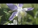 Весна Ф. Лист - Утешение