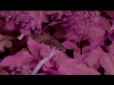 Wumpscut - Wreath of barbs Много-много лет назад...
