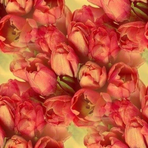Цветочные и растительные фоны - Страница 3 5cih6xVx0sc