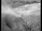 Dan Sartain - Flight Of The Finch