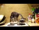 Ох уж эти кошки хорошее настроение юмор смешное видео кот котенок котята кошки звери домашнее животное хищник кухня