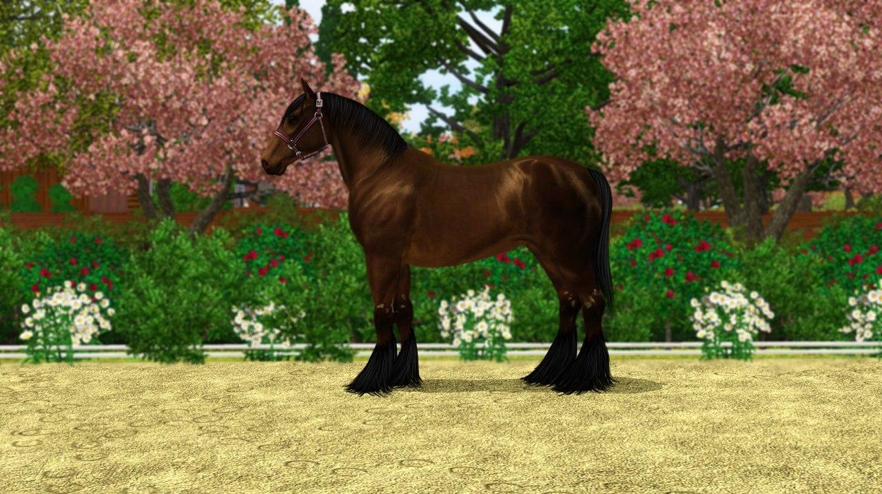 Регистрация лошадей в RHF 1.2 - Страница 9 CxKWWYgwT7g