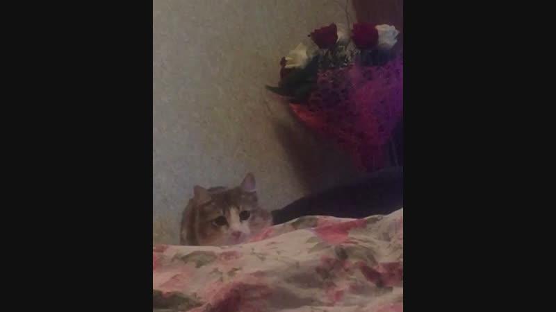 Кот обормот😂
