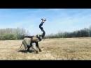 Слон трюкач
