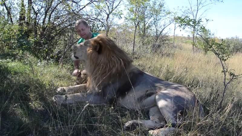 Тет а Тет с львом Чуком