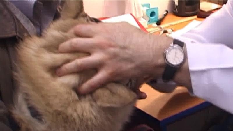 Клиника кота Васьки