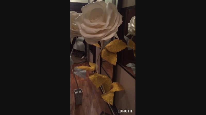Обзор роз с переливающимися листьями 💥💥💥юлия👑