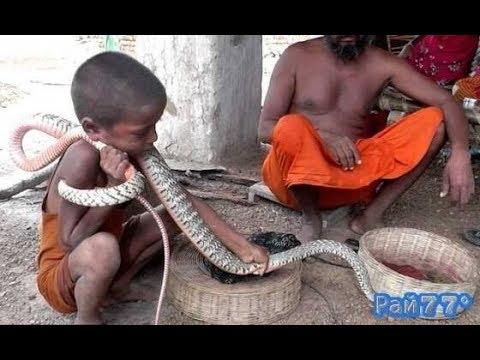 Индийский факир обучает маленьких детей искусству заклинания змей