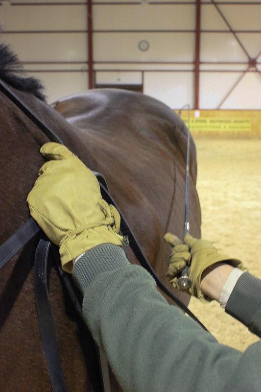 Разбор 2-х поводьев в одну руку, с возможностью управления постановлением лошади  6H45ibW8u8c