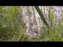 Немцы форсируют ручей