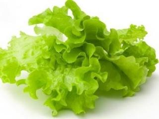 Производство салата в теплице.