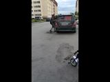 пони в Дивногорском